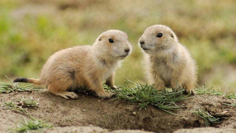 Animale mici